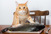 Orange cat and a big fish — Stock Photo