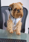 Dog in the headphones with microphone — Stock Photo