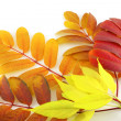 Twigs with color autumn leaves — Stock Photo