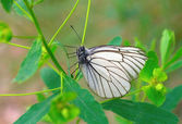 Butterfly on the green branch — Stock Photo
