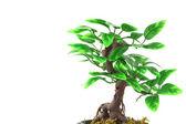 Konstgjorda bonsaiträd över vita — Stockfoto