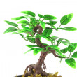 Artifical Bonsai tree over white — Stock Photo #19629919