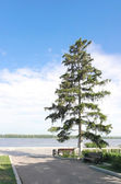 High fir on quay of river Volga — Stock Photo