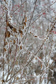 Twig of tree hoar-frost covered — ストック写真