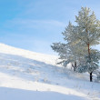 Lonely pine snow covered — Stock Photo