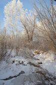 美丽的冬天风景与树 — 图库照片