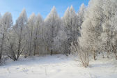 Beautiful winter landscape in forest — Stock Photo