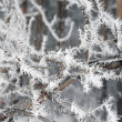 Twig of tree hoar-frost covered — Stock Photo