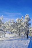 Noite paisagem de inverno — Foto Stock
