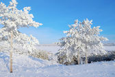 Trees snow covered on the hill — Stock Photo
