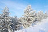 красивый зимний пейзаж — Стоковое фото
