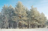 Winter landscape in forest — Stock Photo