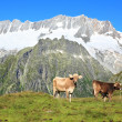 Stock Photo: Mountain pasture