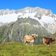 Mountain pasture — Stock Photo