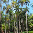 Tropical forest — Foto Stock