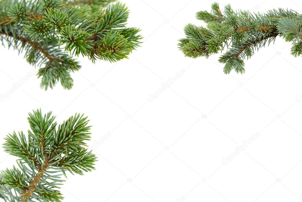Fir tree isolated on white — Stock Photo #13979263
