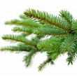 Fir tree — Stock Photo #14710861