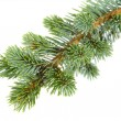Fir tree — Stock Photo #14710875