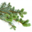 Fir tree — Stock Photo #14710887