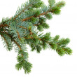 Fir tree — Stock fotografie #14710905