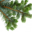 Fir tree — Stockfoto #14710911