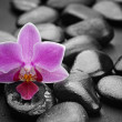 Zen basalt stones and orchid  — Stock Photo