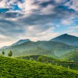 Tea plantations — Stock Photo #22229155