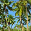 Palm trees — Stockfoto #22229183