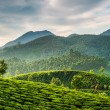 Tea plantations — Stock Photo #32524289
