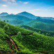 Tea plantations — Stock Photo #32524671