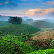 Tea plantations — Stock Photo #32525263