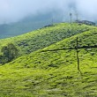 Tea plantations — Stock Photo #32525359