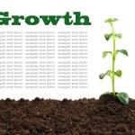 Growth — Stock Photo #40272279