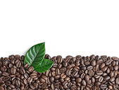 Coffee grains and leaves — Stock Photo