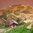 Longji rice terraces, Guangxi province, China - Stock Photo