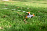 Watered grass — Stock Photo