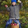 Boy with apples — Stock Photo #15411641
