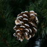 Bump on the tree — Stock Photo