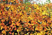 Jesienią liście kolory — Zdjęcie stockowe