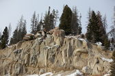 Mount Top Washington State. Yellowstone NP USA. — Stock Photo