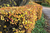 Outono maple leafs cores douradas — Fotografia Stock