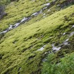 Beautiful nature of Norway — Stock Photo #21523827