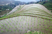 Longji reisterrassen, provinz guangxi, china — Stockfoto
