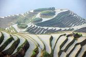 Longji rice terraces, Guangxi province, China — Stock Photo