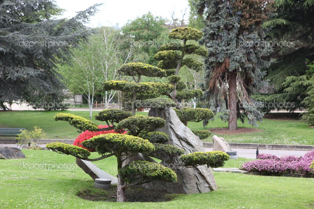 Rbol de la decoraci n de corte en el jard n japon s for Arboles jardin japones