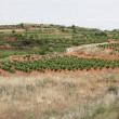 Fields of vineyards in La Rioja, Spain — Stock Photo