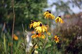Gele bloemen met swirl bokeh, oude stijl lens — Stockfoto