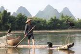 YANGSHUO - JUNE 18: Chinese man fishing with cormorants birds — Stock Photo