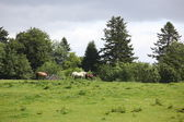 Horses on the field, Blair Castle, Scotland, UK — Stock Photo