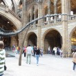Interior view of Natural History Museum in London — Stock Photo